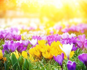 Jaro 2019 a sleva 25% na potisk hrnků